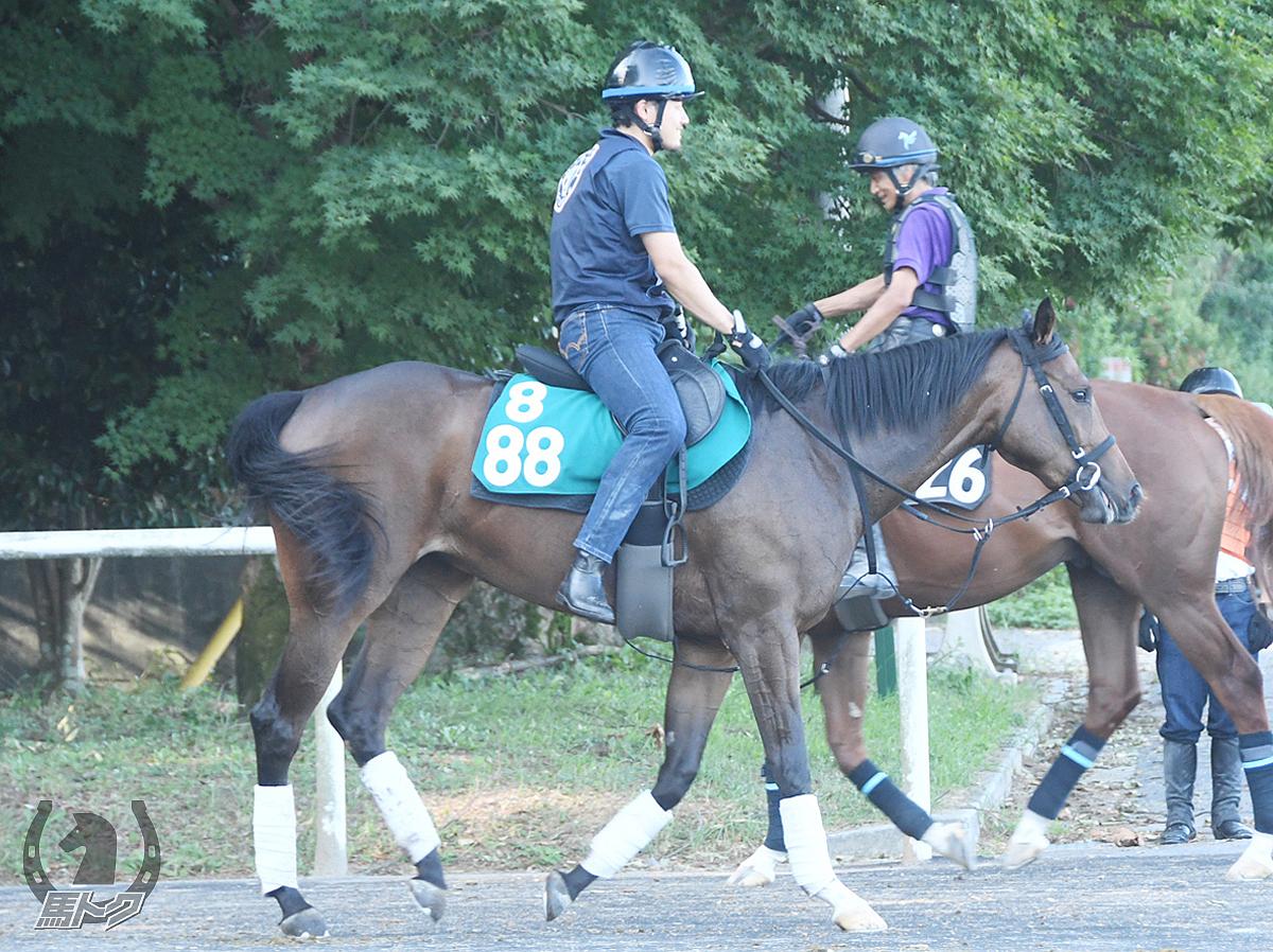 ルピナスメアーの馬体写真