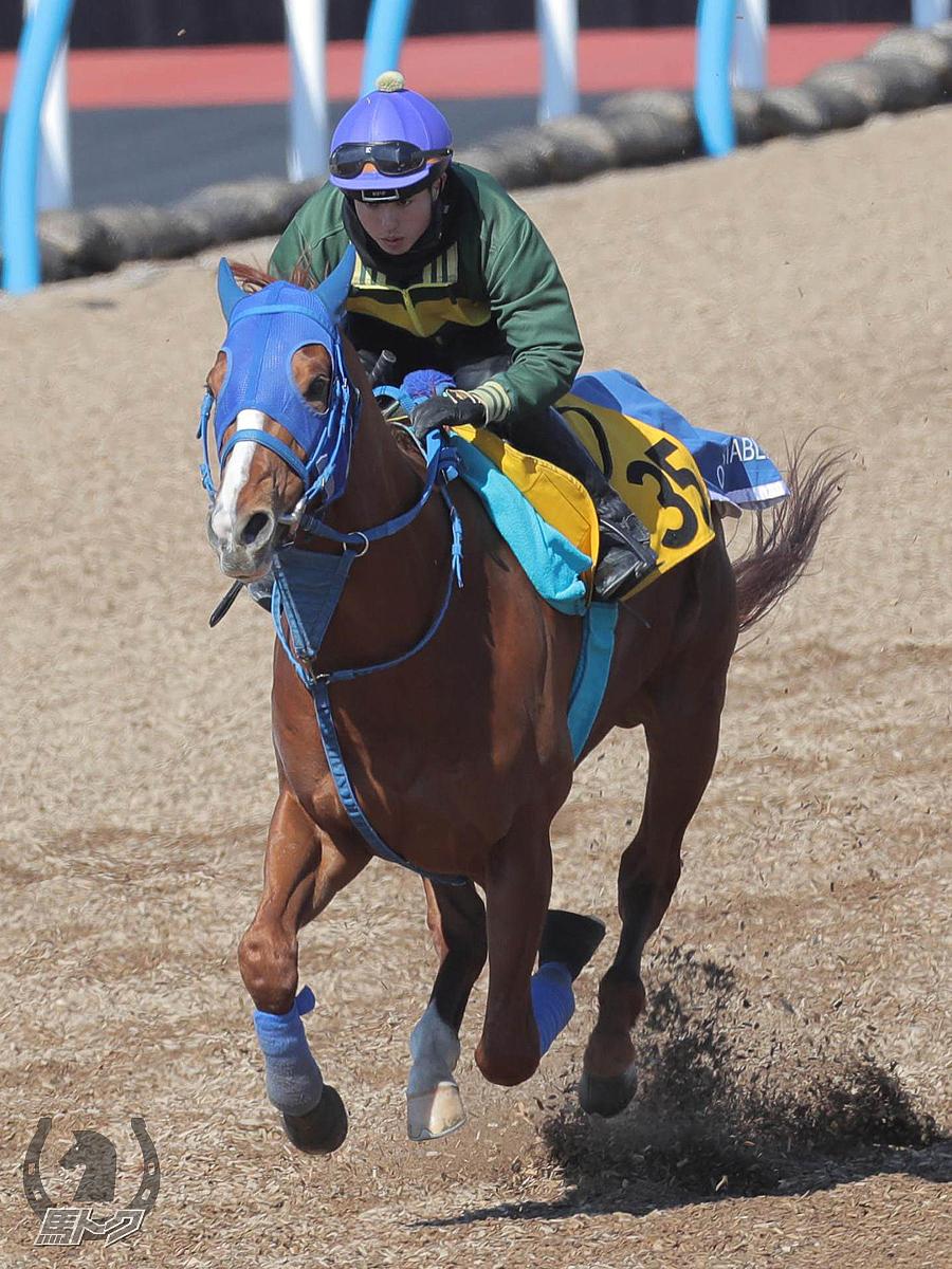 アシャカトブの馬体写真