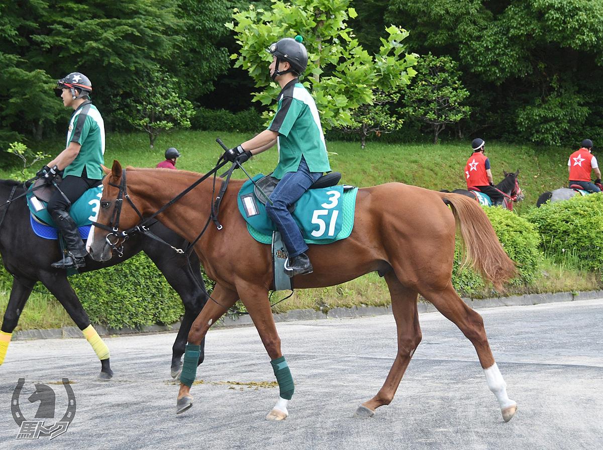 テーオートレジャーの馬体写真