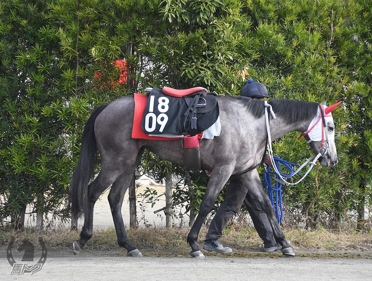 シーアイリスの馬体写真