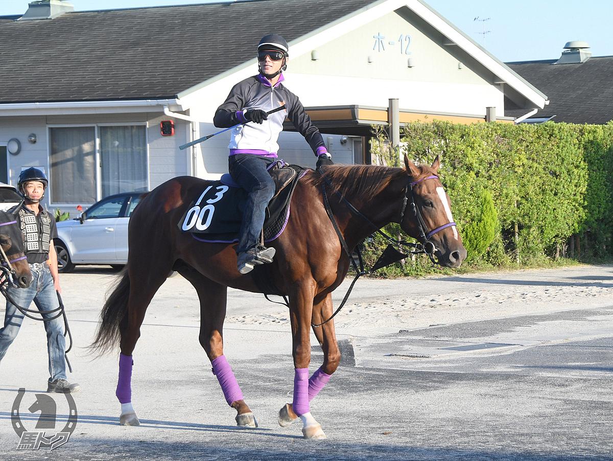 ルノワールの馬体写真