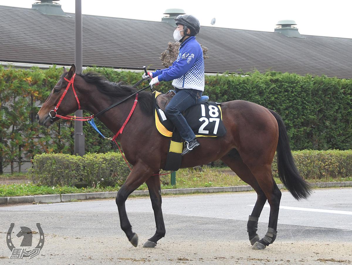 ラドミュージシャンの馬体写真