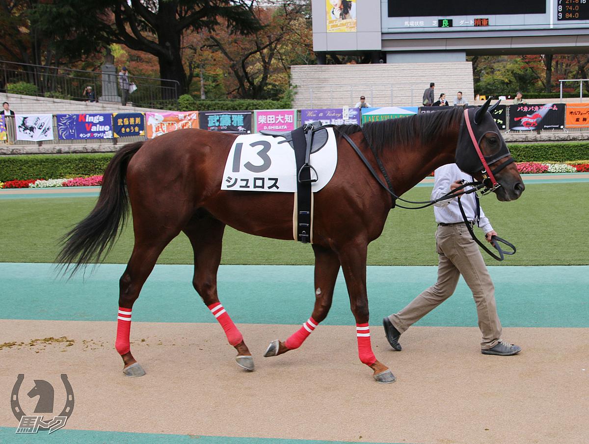 シュロスの馬体写真