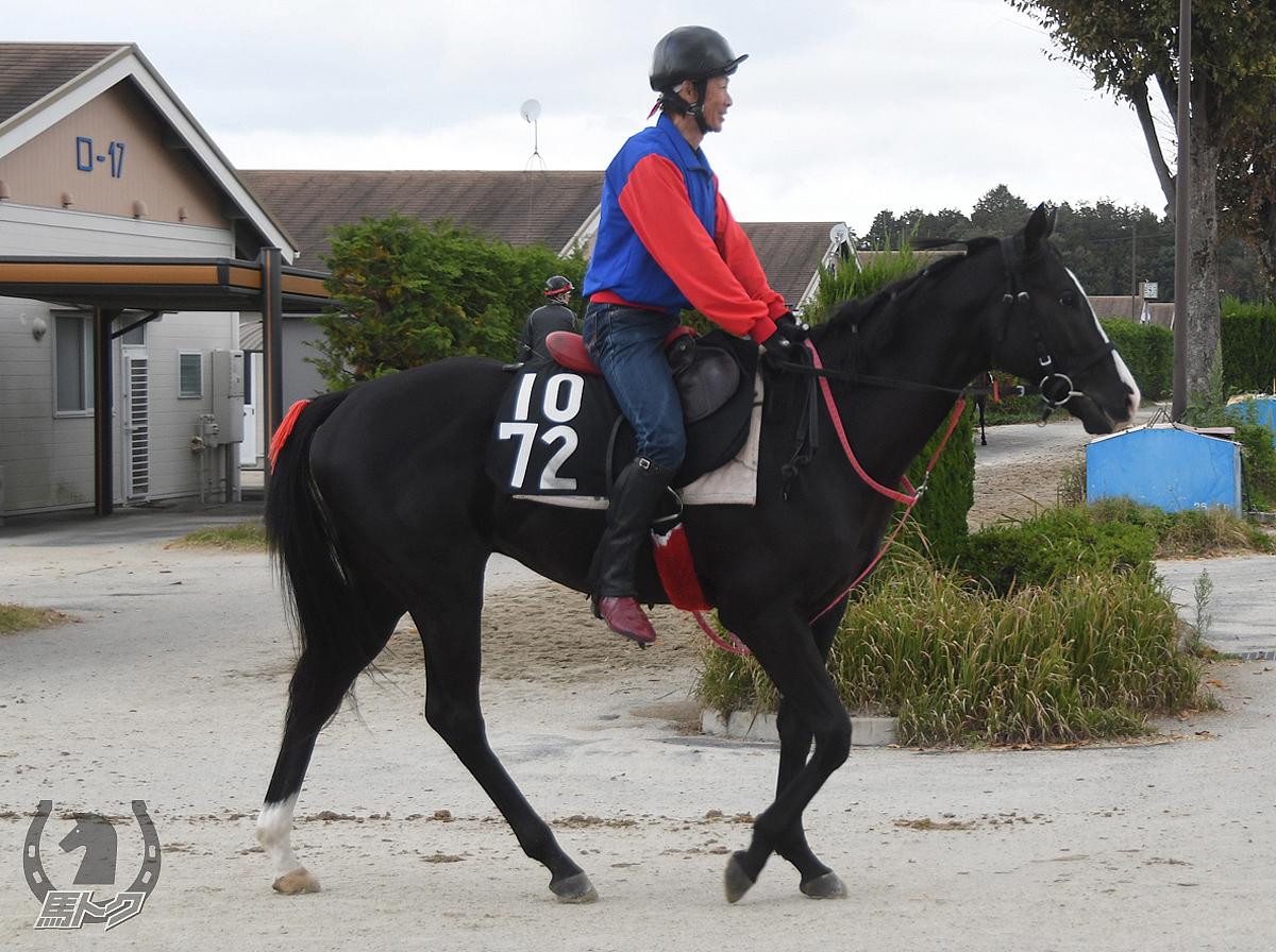 ヤマカツシシマルの馬体写真