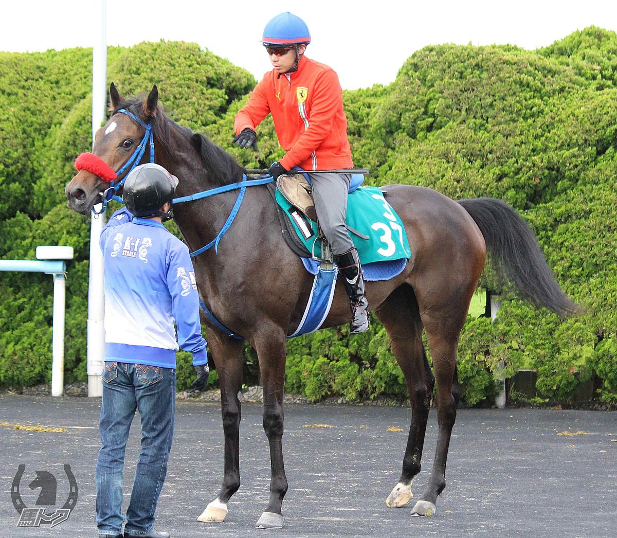 ヤマカツルビーの馬体写真