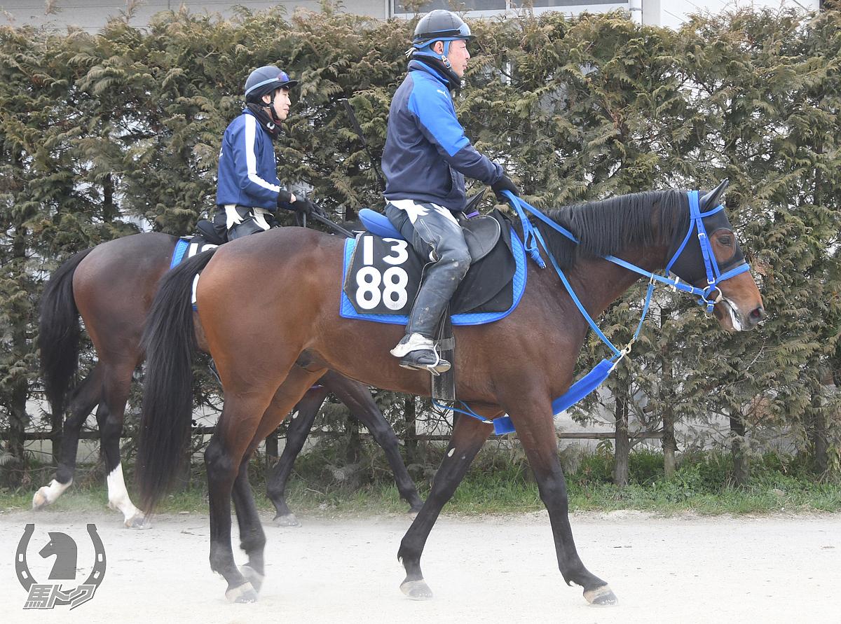 ブルーコンパクタの馬体写真
