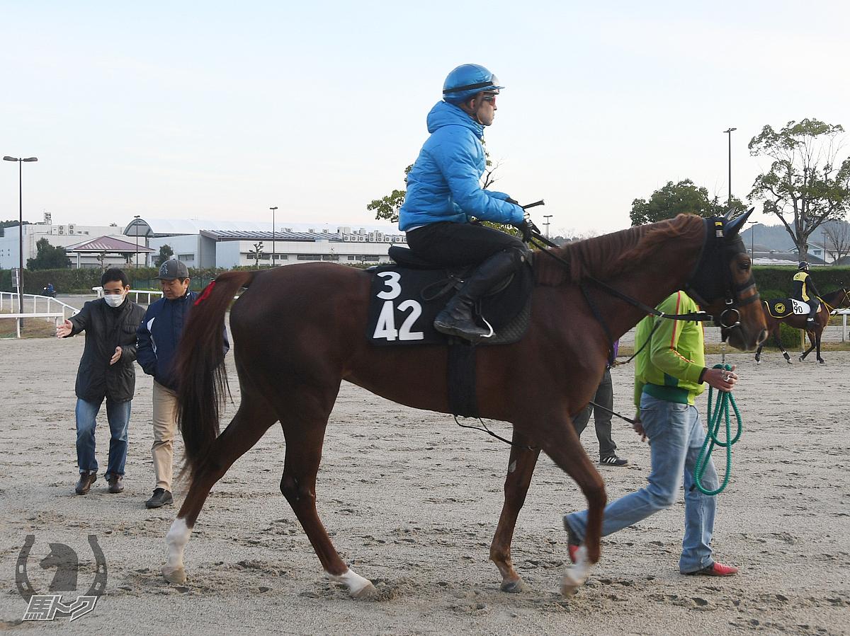 ケイティマドンナの馬体写真