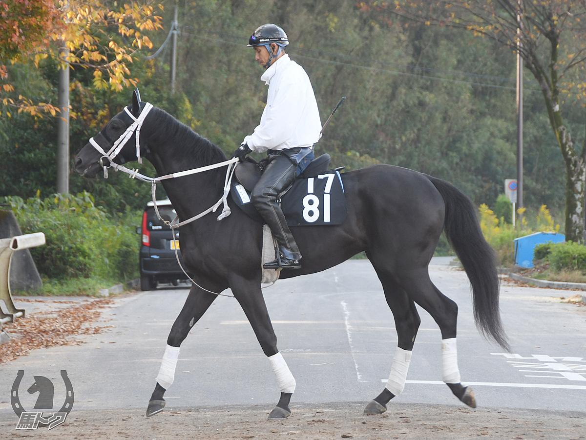 ペガサスの馬体写真