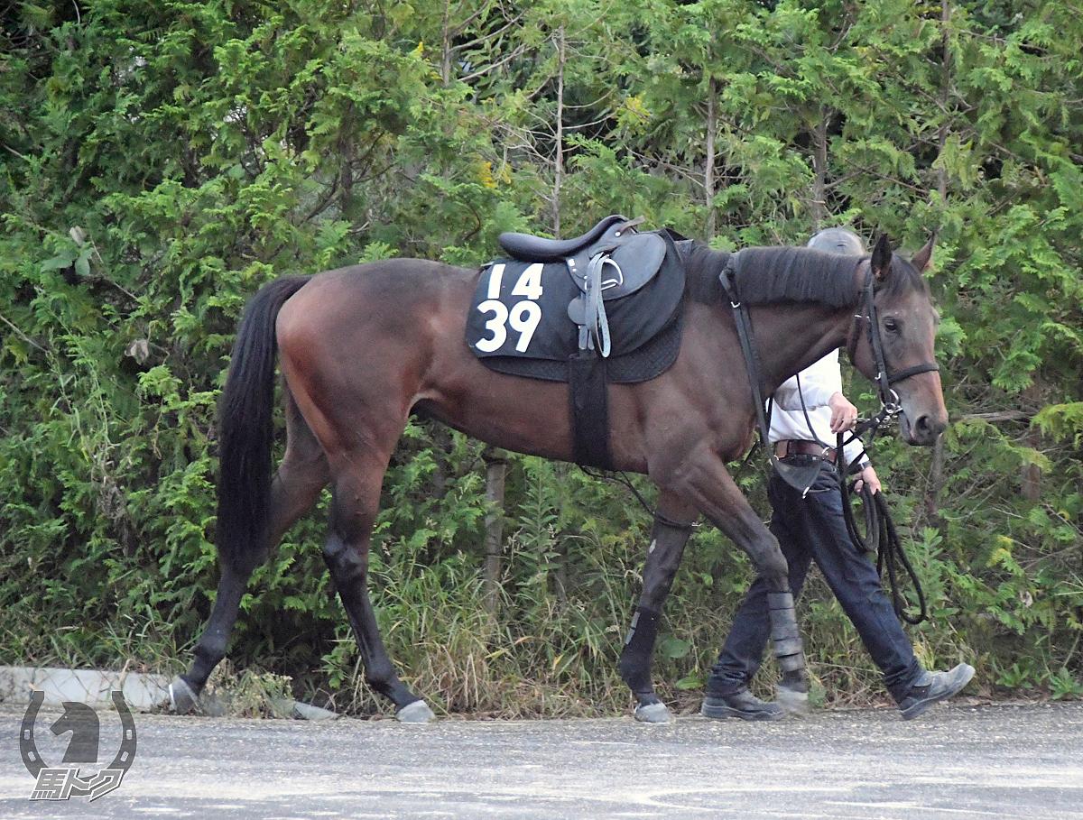 レディポワソンの馬体写真