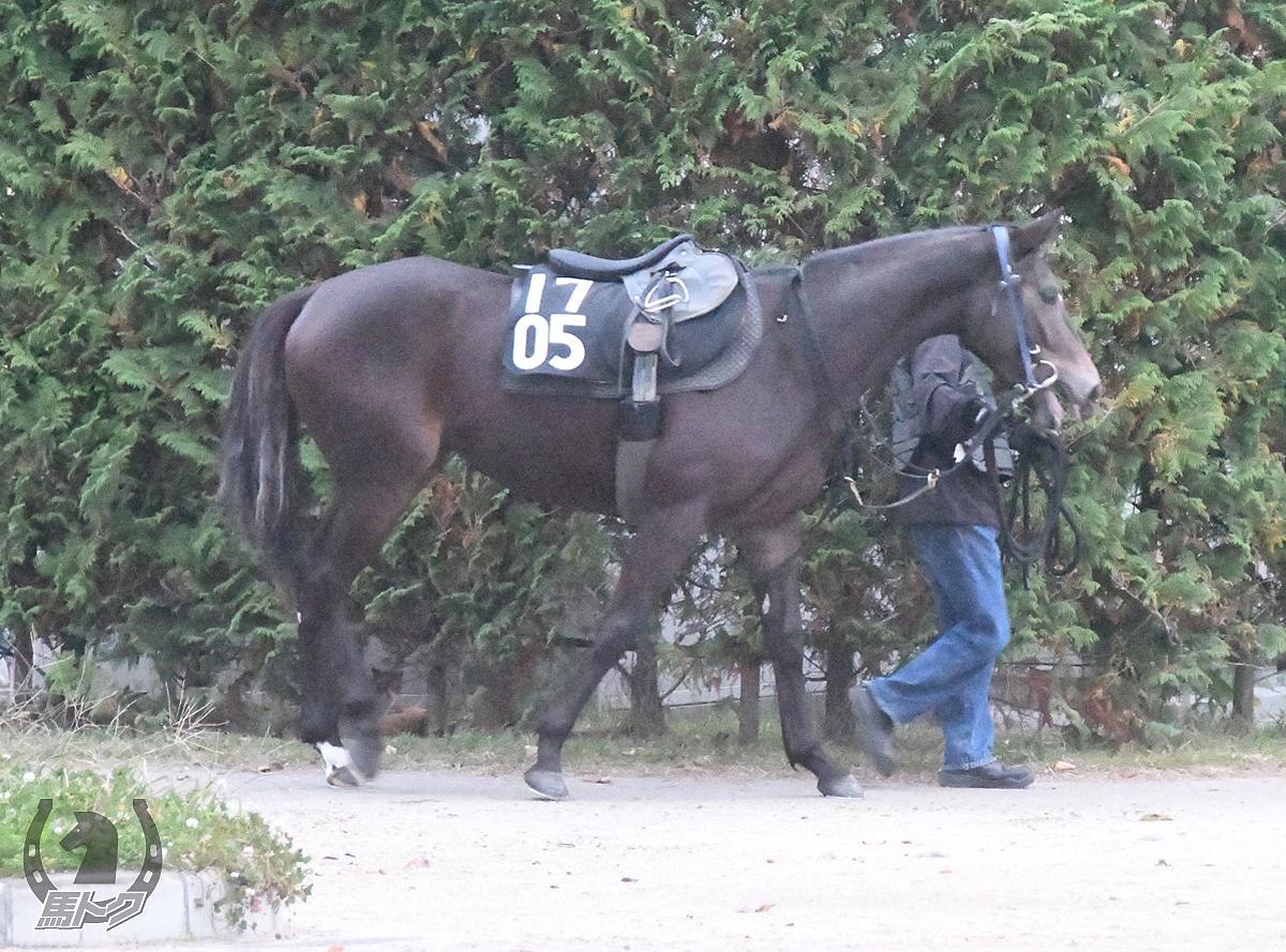 ニホンピロハービンの馬体写真