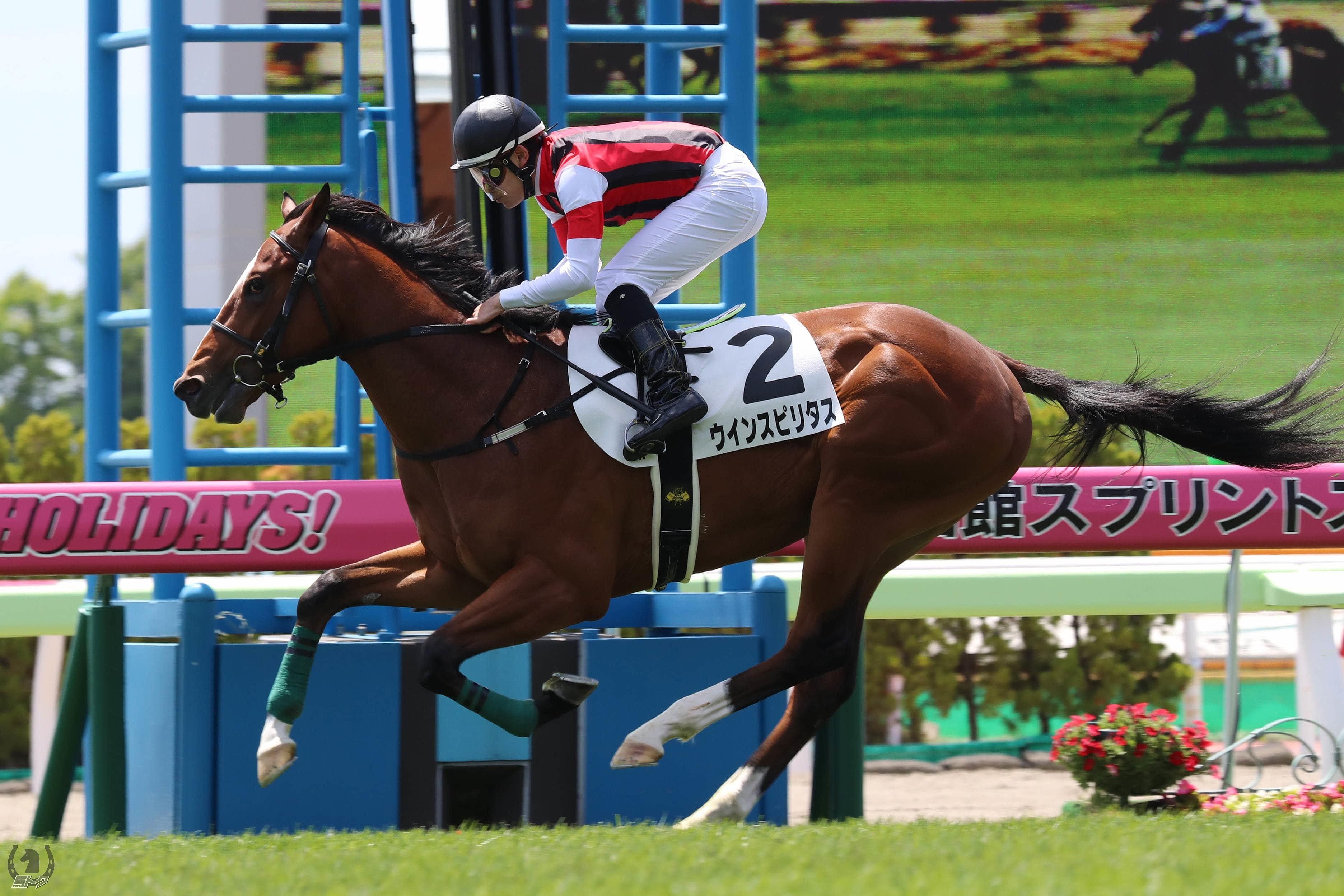 ウインスピリタスの馬体写真