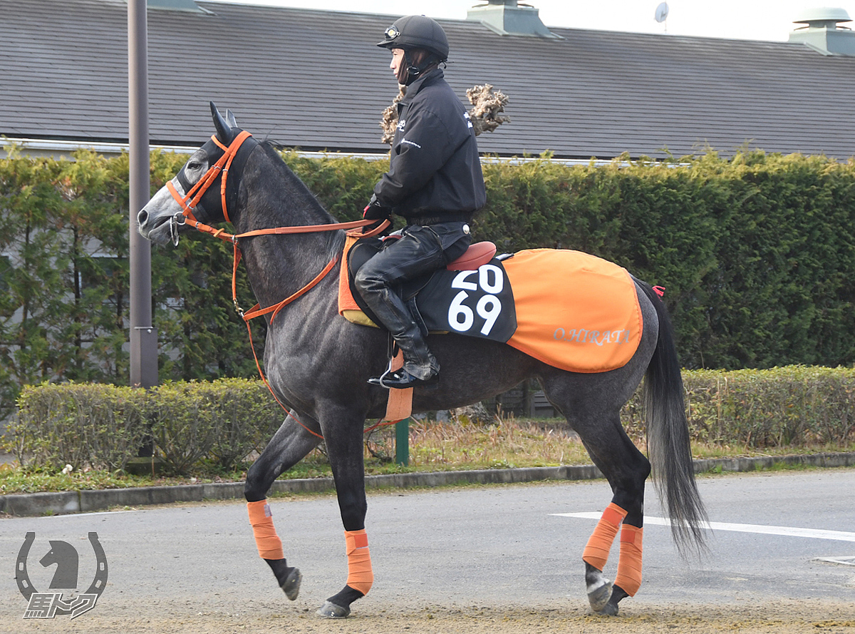 サダムオリジンの馬体写真
