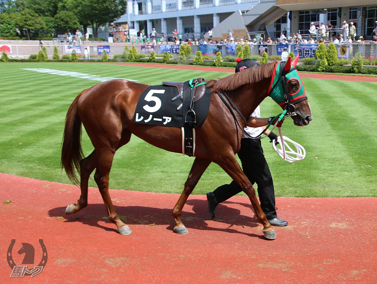 レノーアの馬体写真