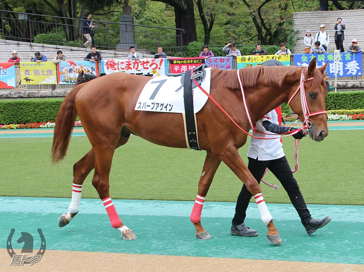 スパーブアゲインの馬体写真