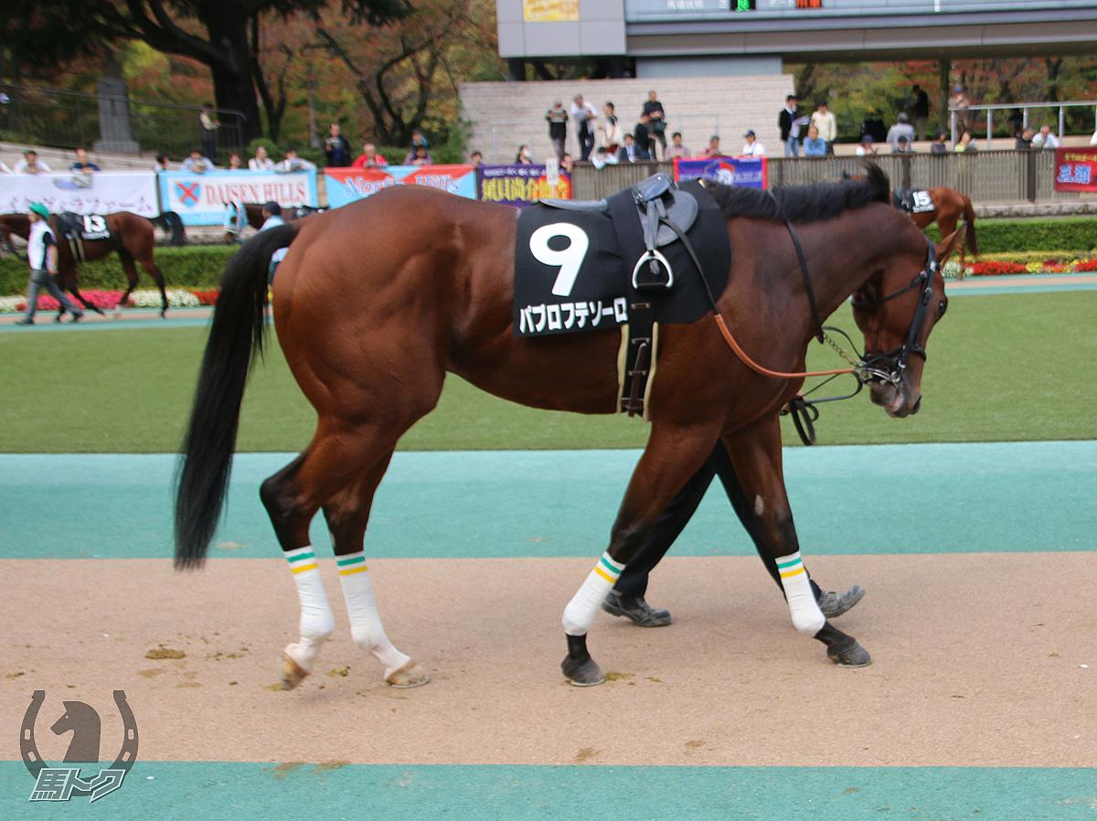 パブロフテソーロの馬体写真