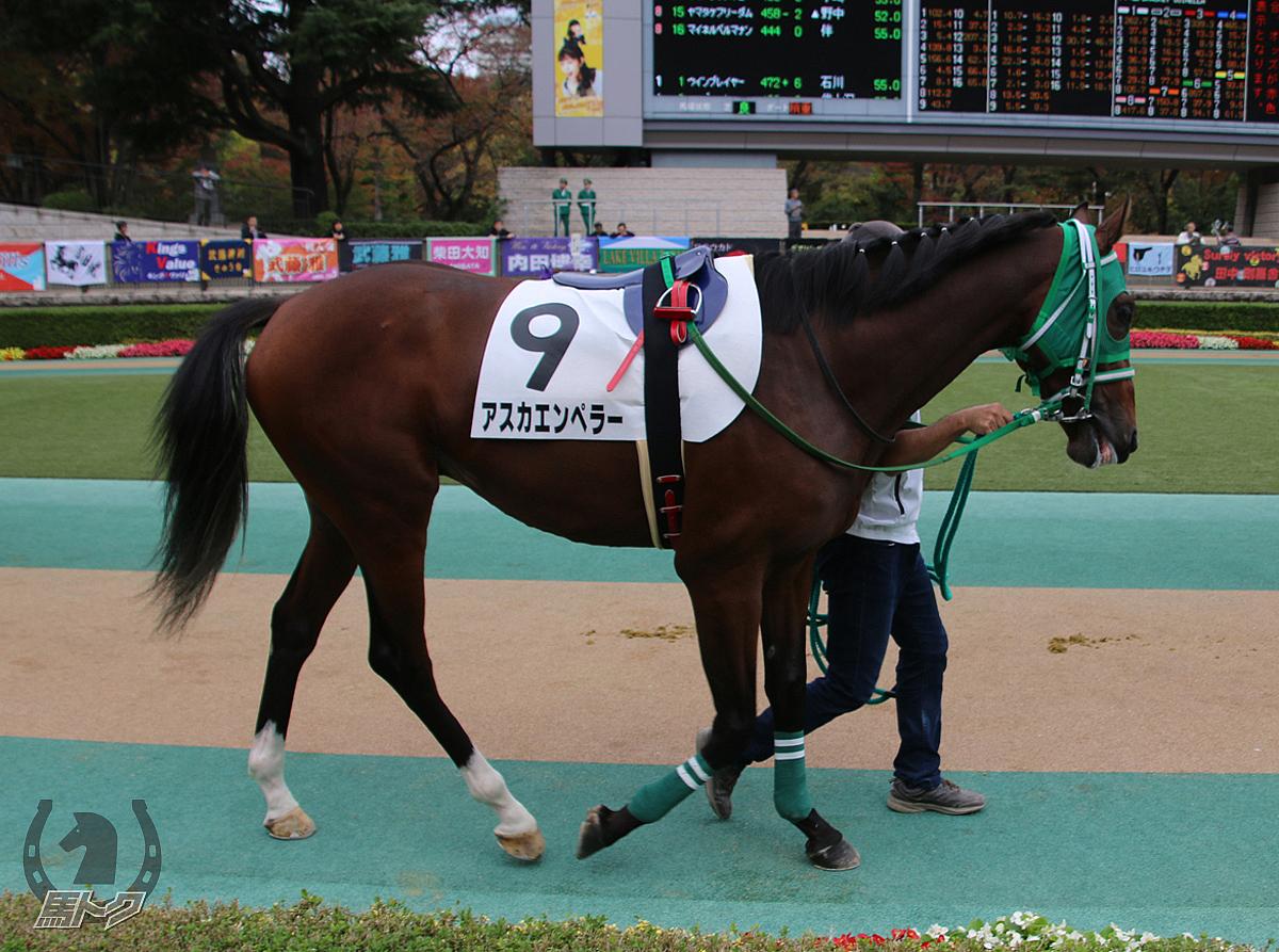アスカエンペラーの馬体写真