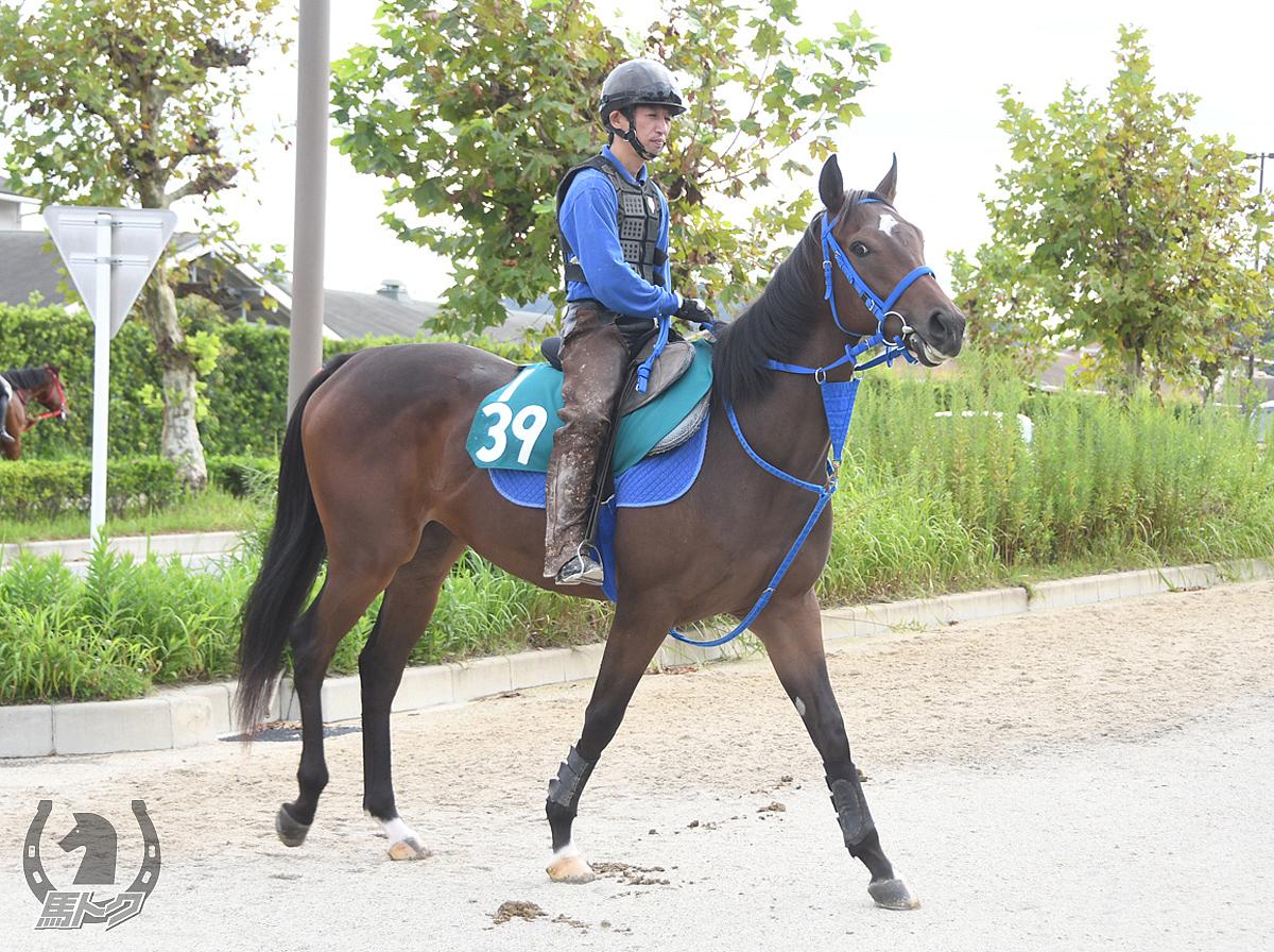 ラストマンボの馬体写真