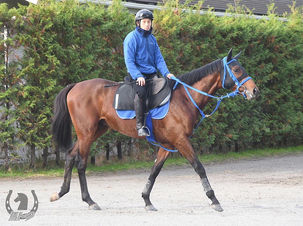 アイアムレジェンドの馬体写真