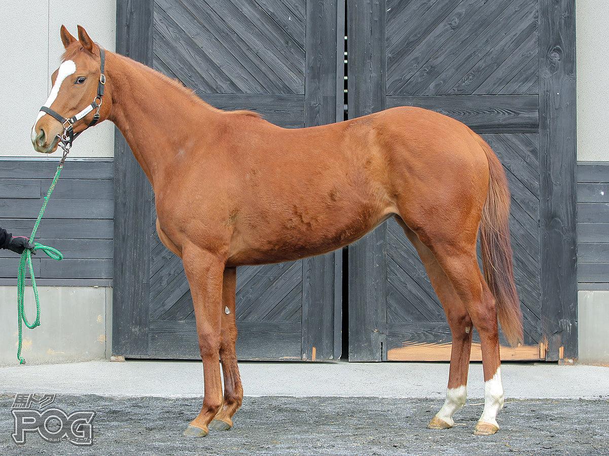 ハニーディスタフの馬体写真