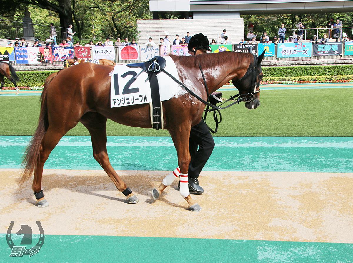 アンジェリーブルの馬体写真