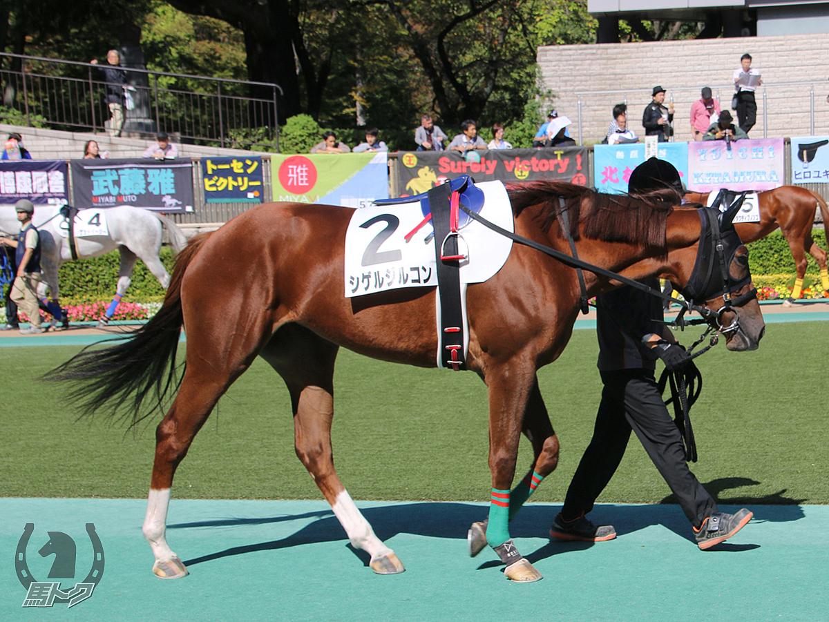 シゲルジルコンの馬体写真