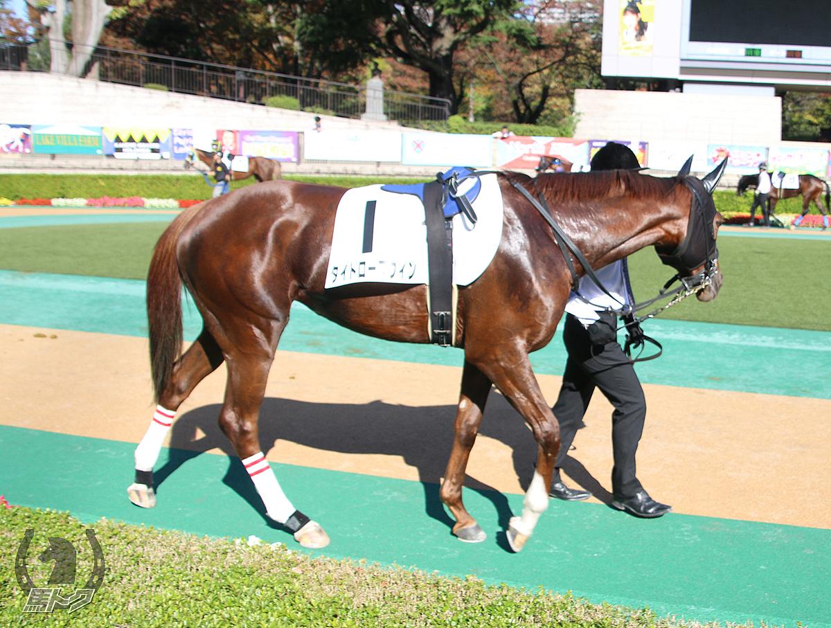 タイトロープウィンの馬体写真