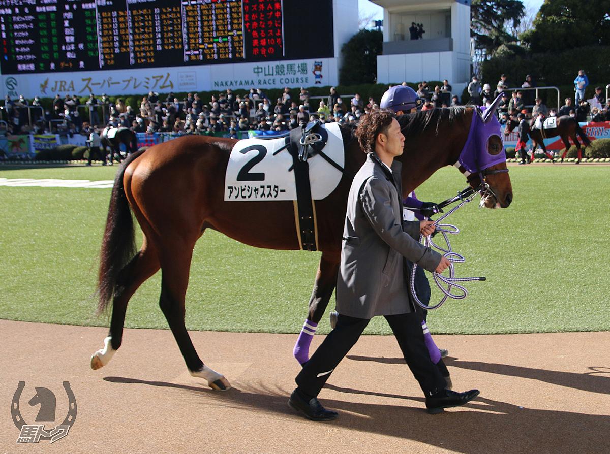 アンビシャススターの馬体写真