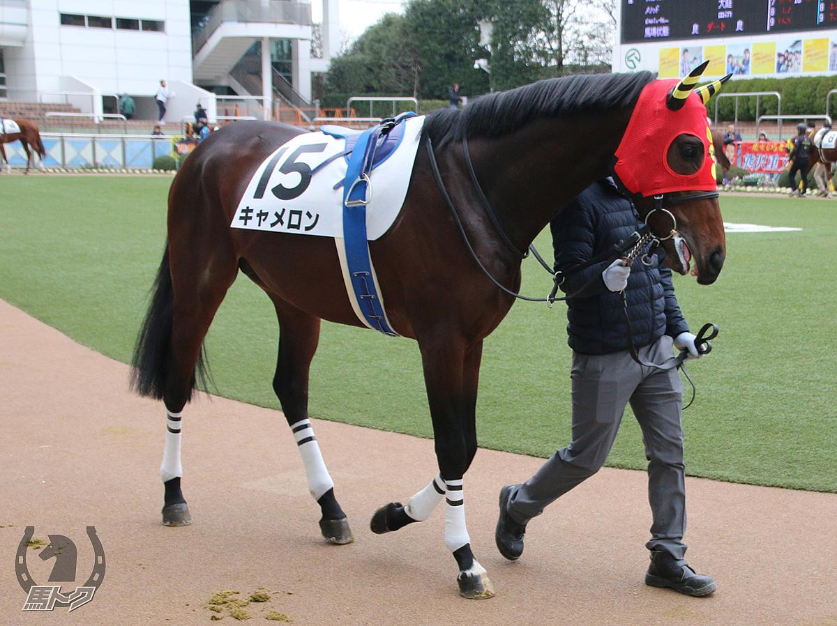 キャメロンの馬体写真
