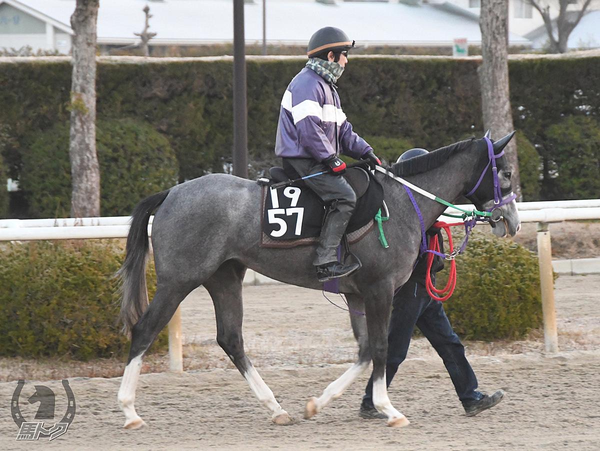 リッカウィンドウの馬体写真