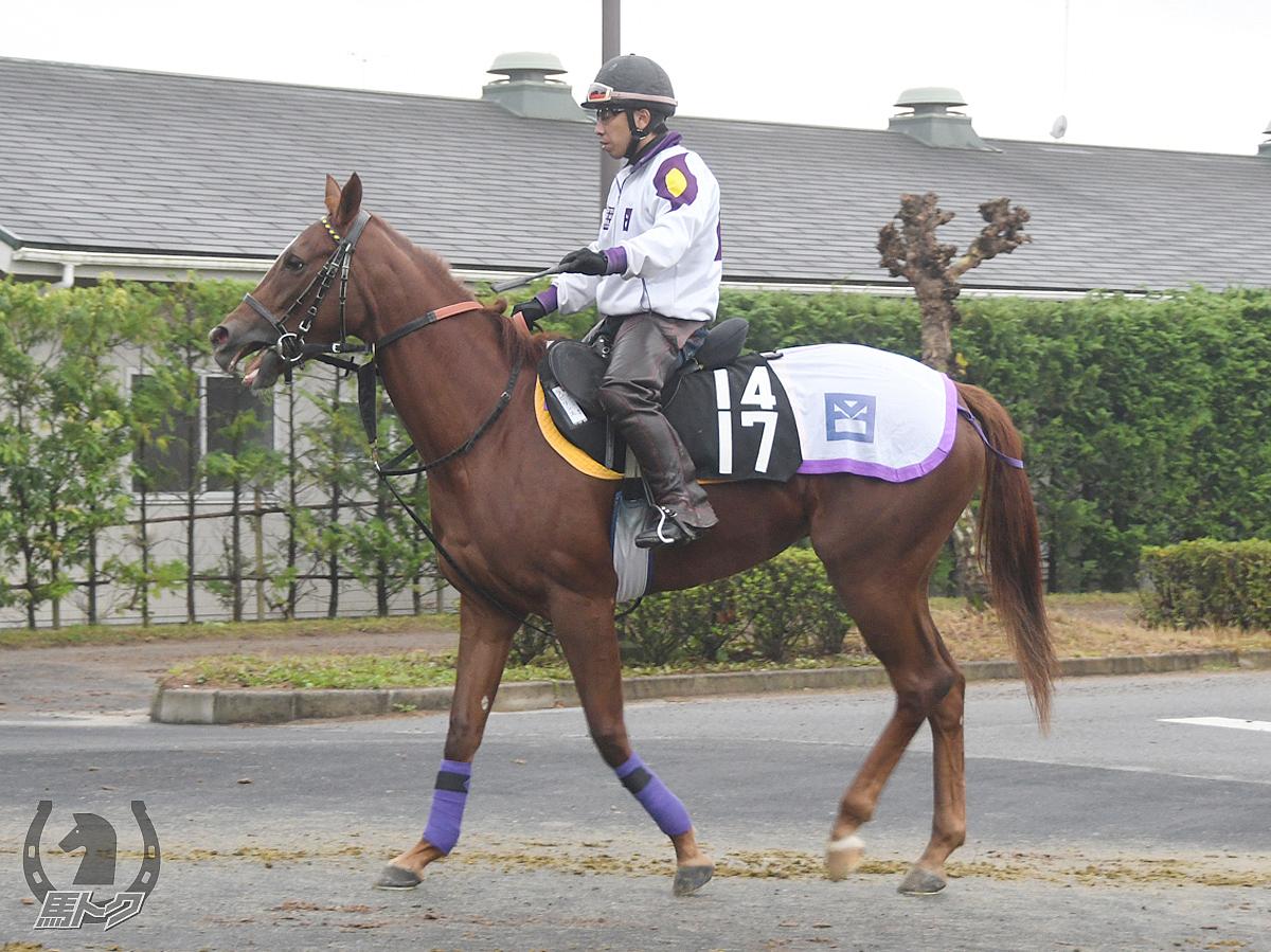 ラビリンスの馬体写真