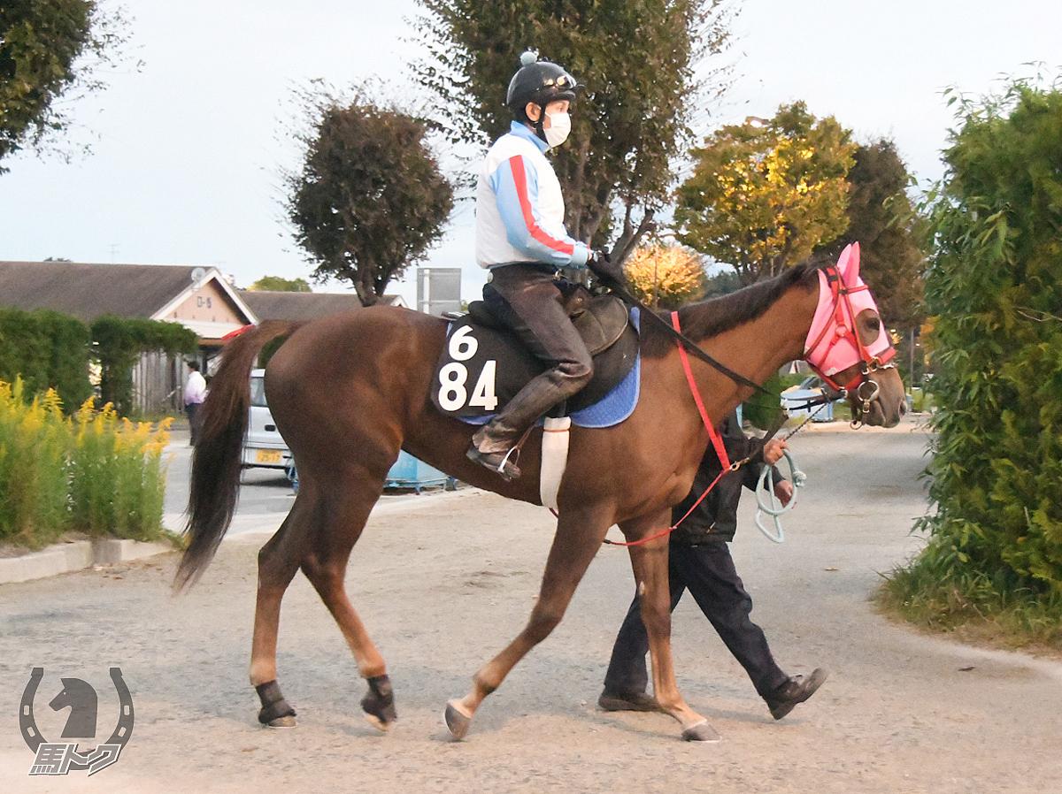 トウケイダヴィンチの馬体写真