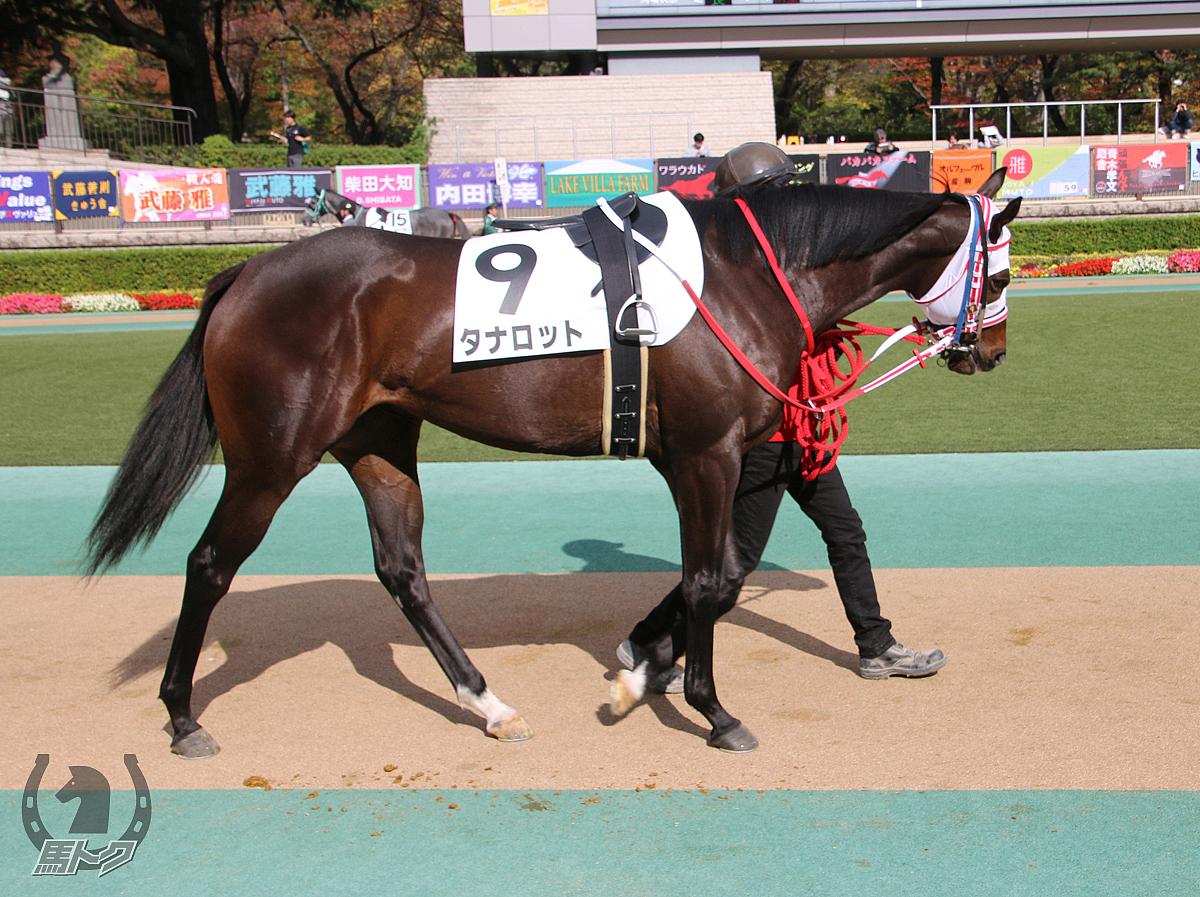 タナロットの馬体写真