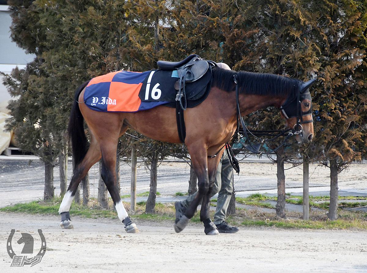 ウインシェフィンの馬体写真