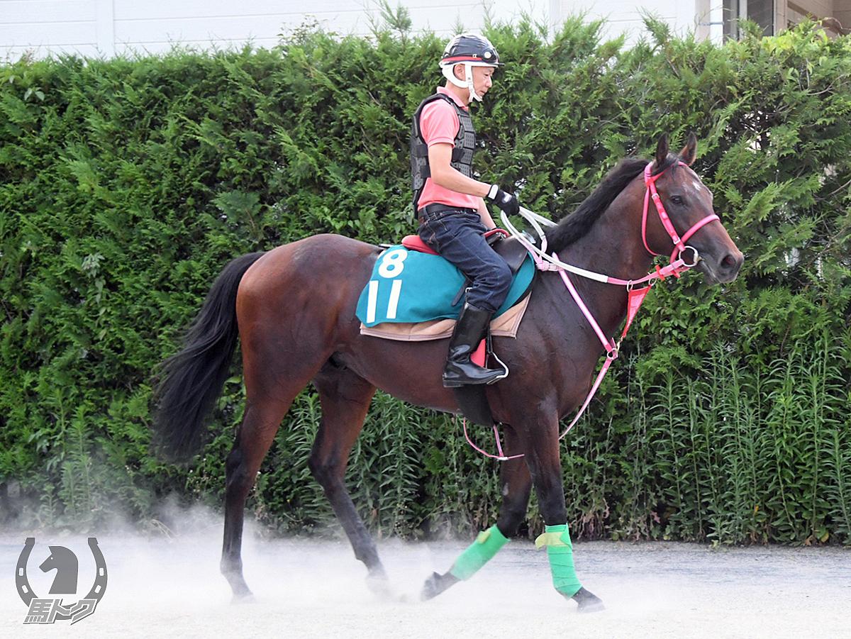 ケイアイサクソニーの馬体写真