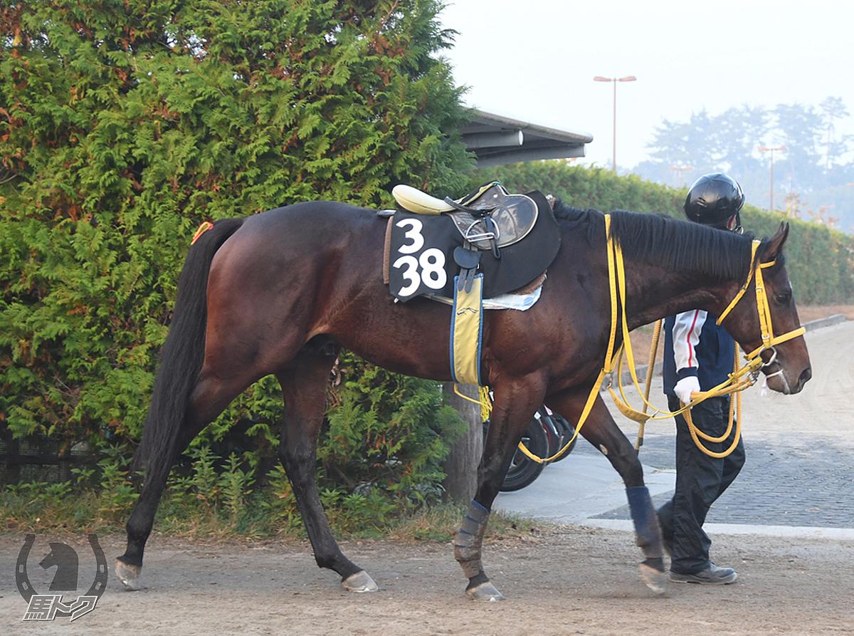 ケイアイマホガニーの馬体写真