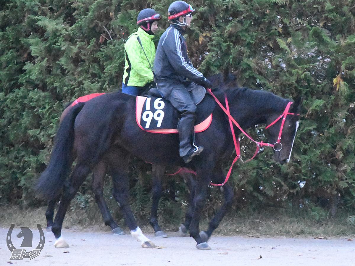 ニホンピロエレノアの馬体写真