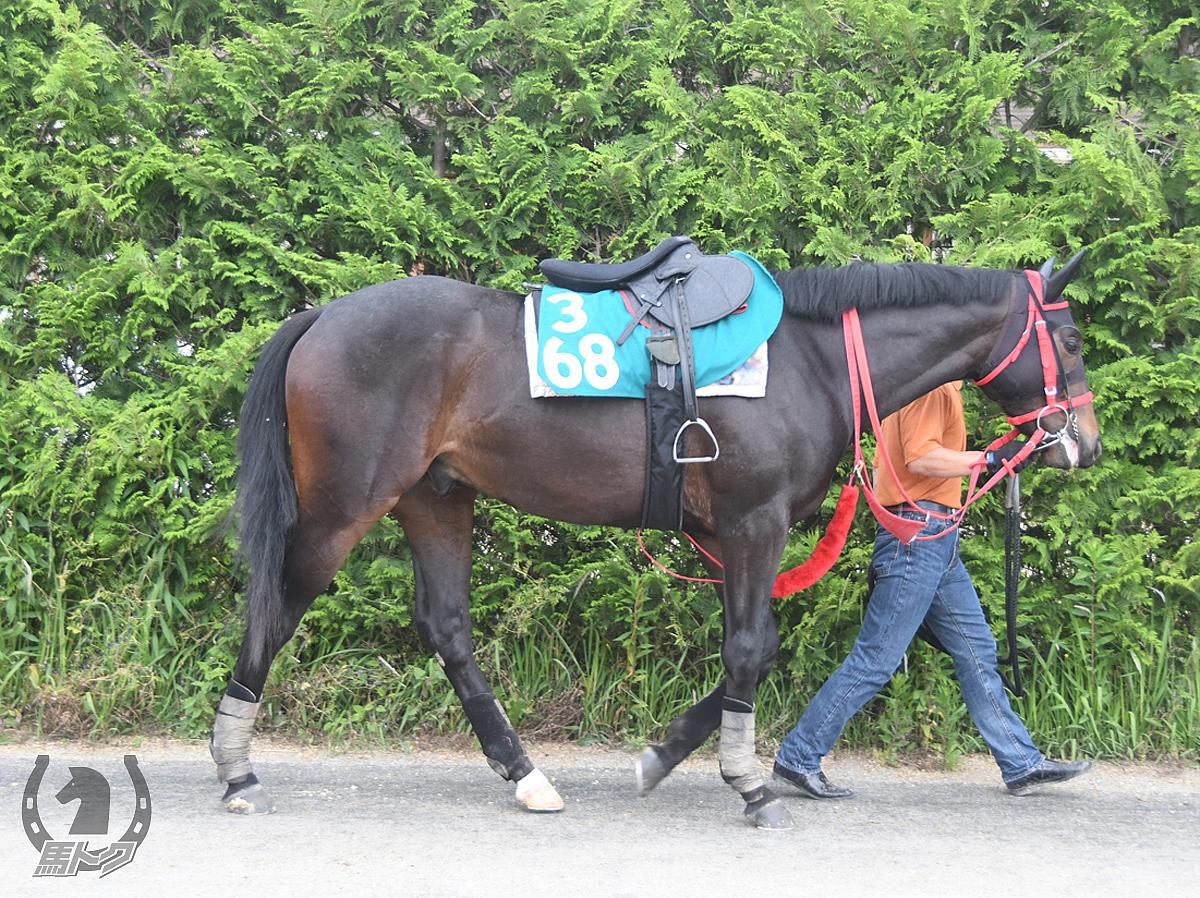 ニホンピロコレールの馬体写真