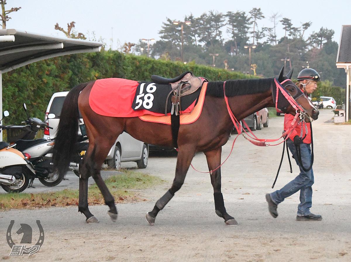 ニホンピロポケットの馬体写真