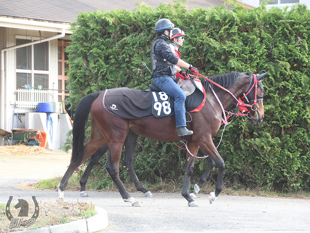 ニホンピロマーサの馬体写真
