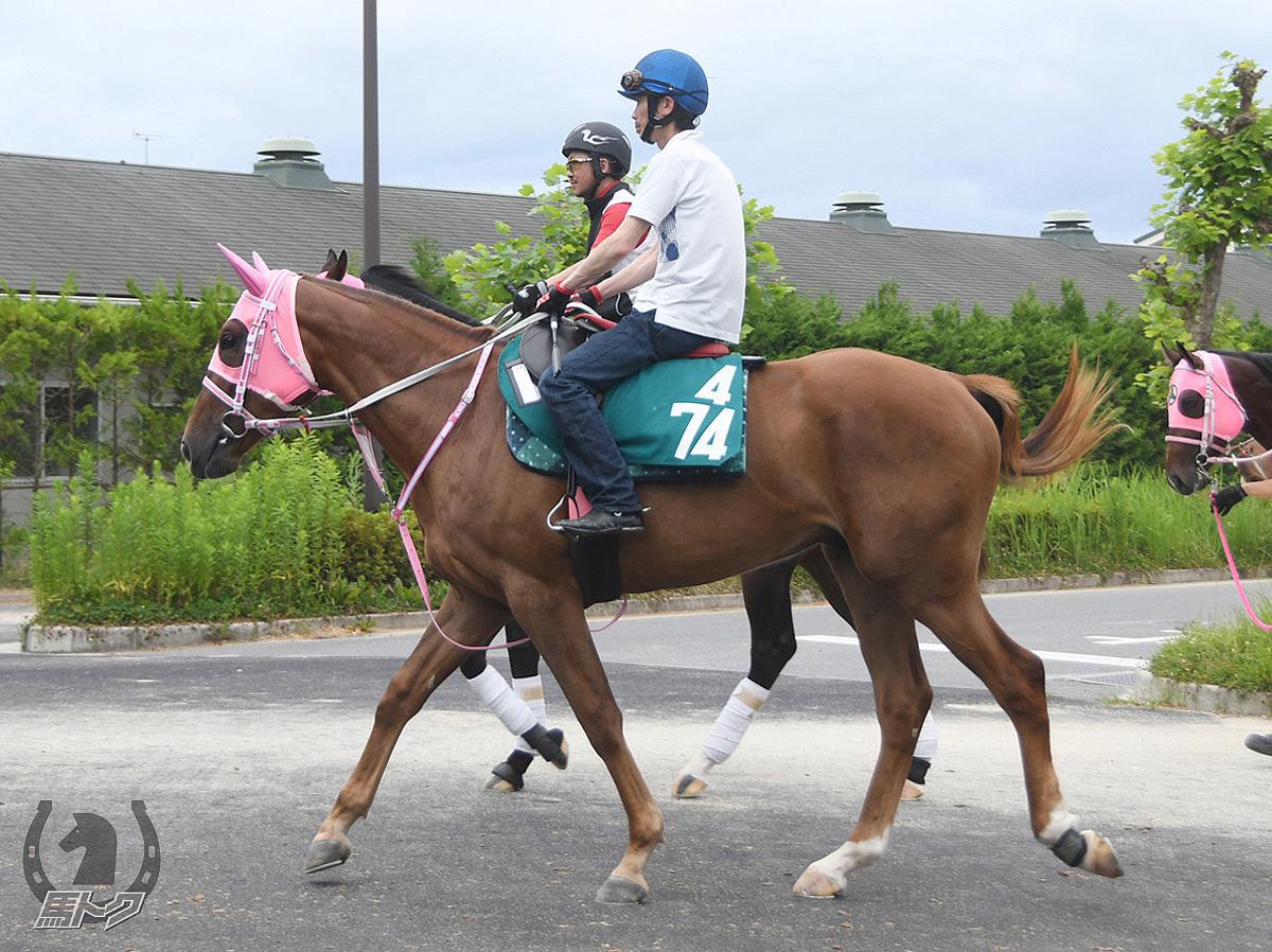 コウエイスパークルの馬体写真