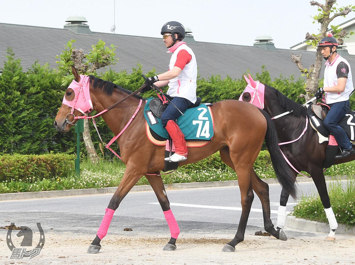 ステップシーの馬体写真