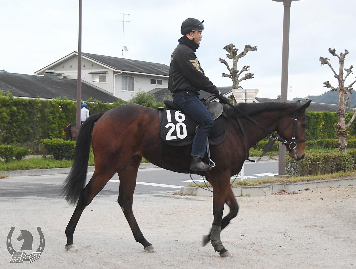 チークハートの馬体写真