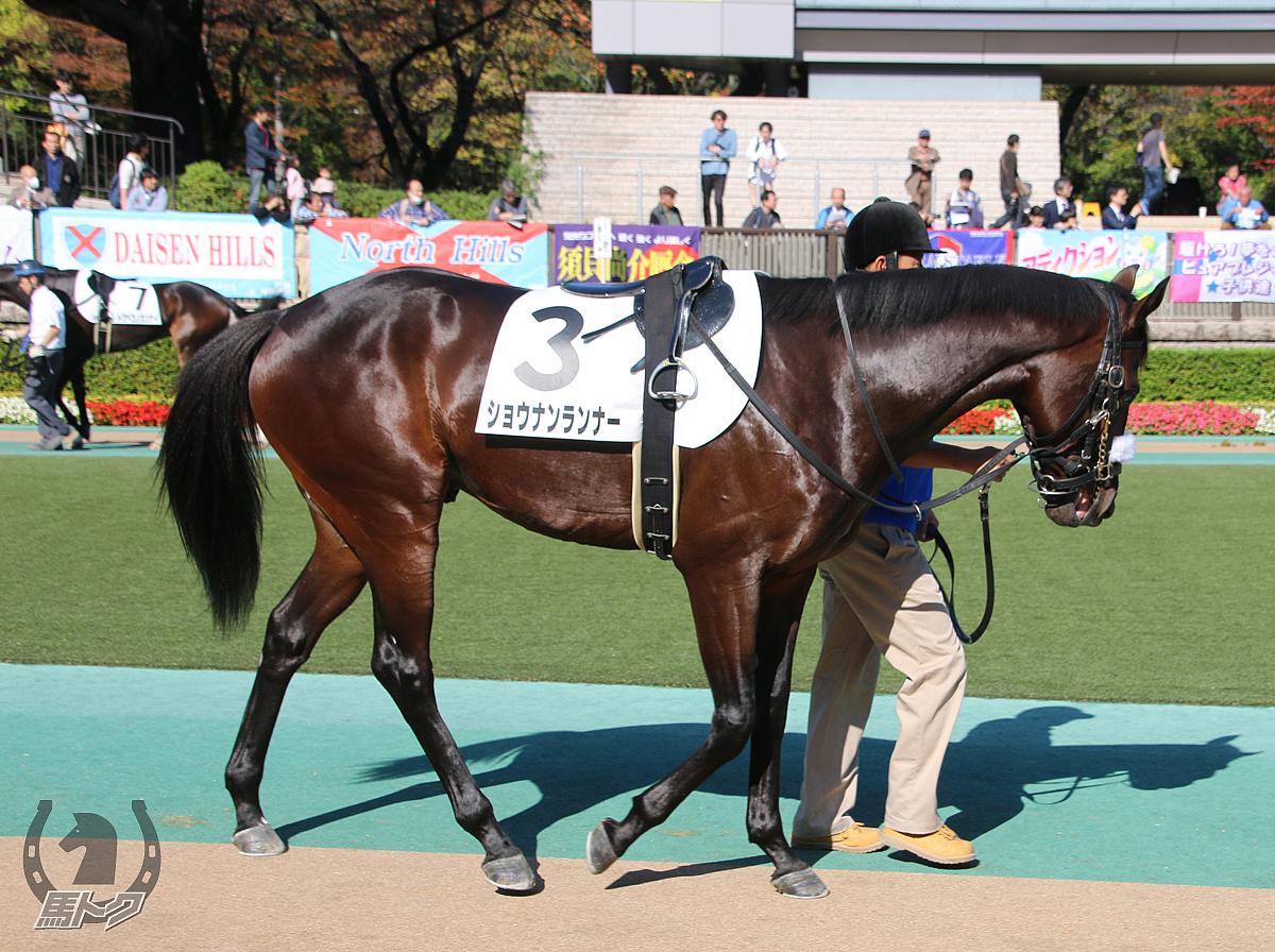 ショウナンランナーの馬体写真