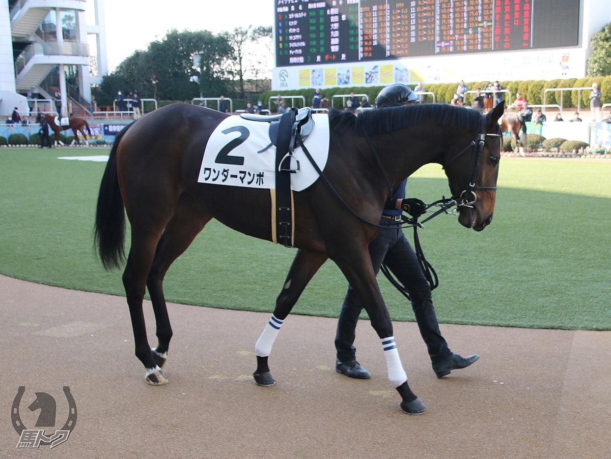 ワンダーマンボの馬体写真