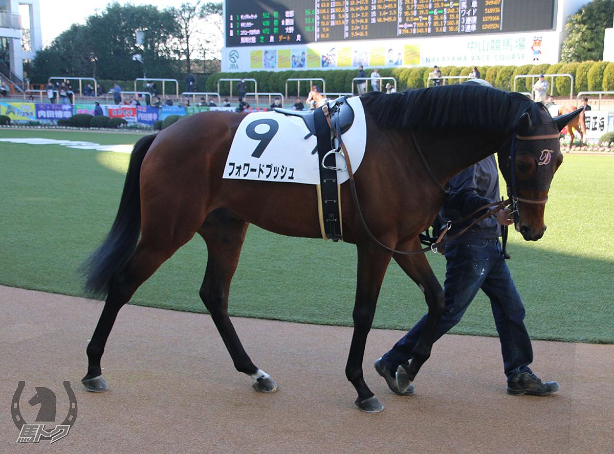フォワードプッシュの馬体写真