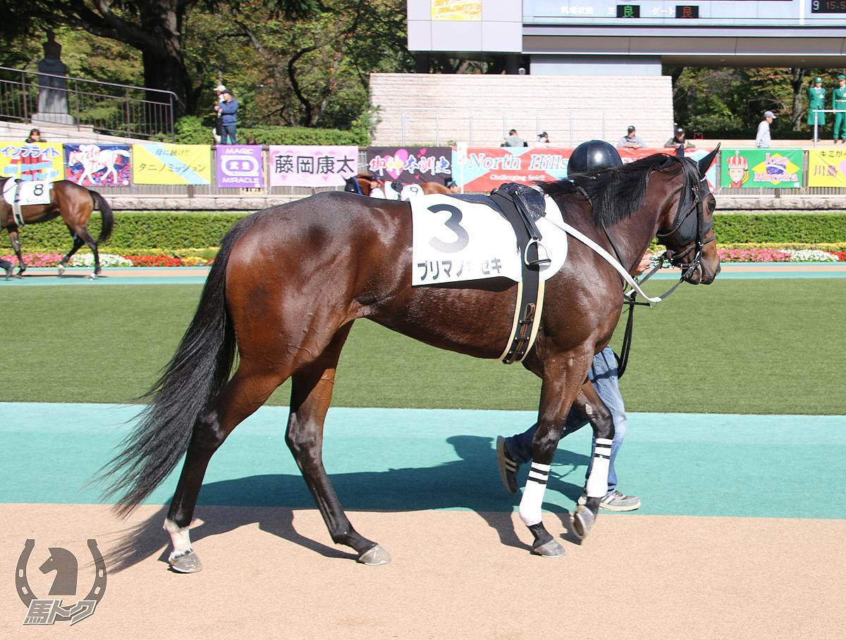 プリマノキセキの馬体写真