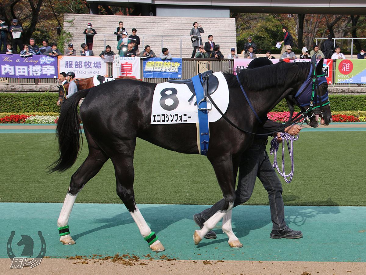 エコロシンフォニーの馬体写真