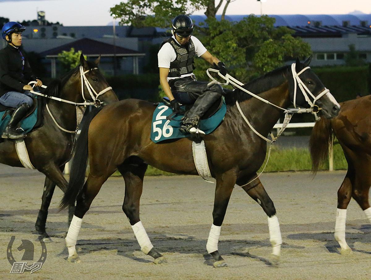 スマートマウアーの馬体写真