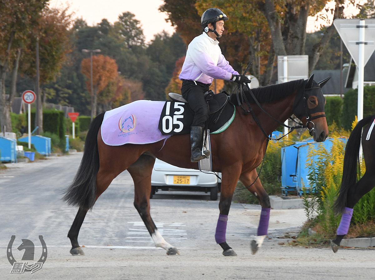 コンソラトゥールの馬体写真