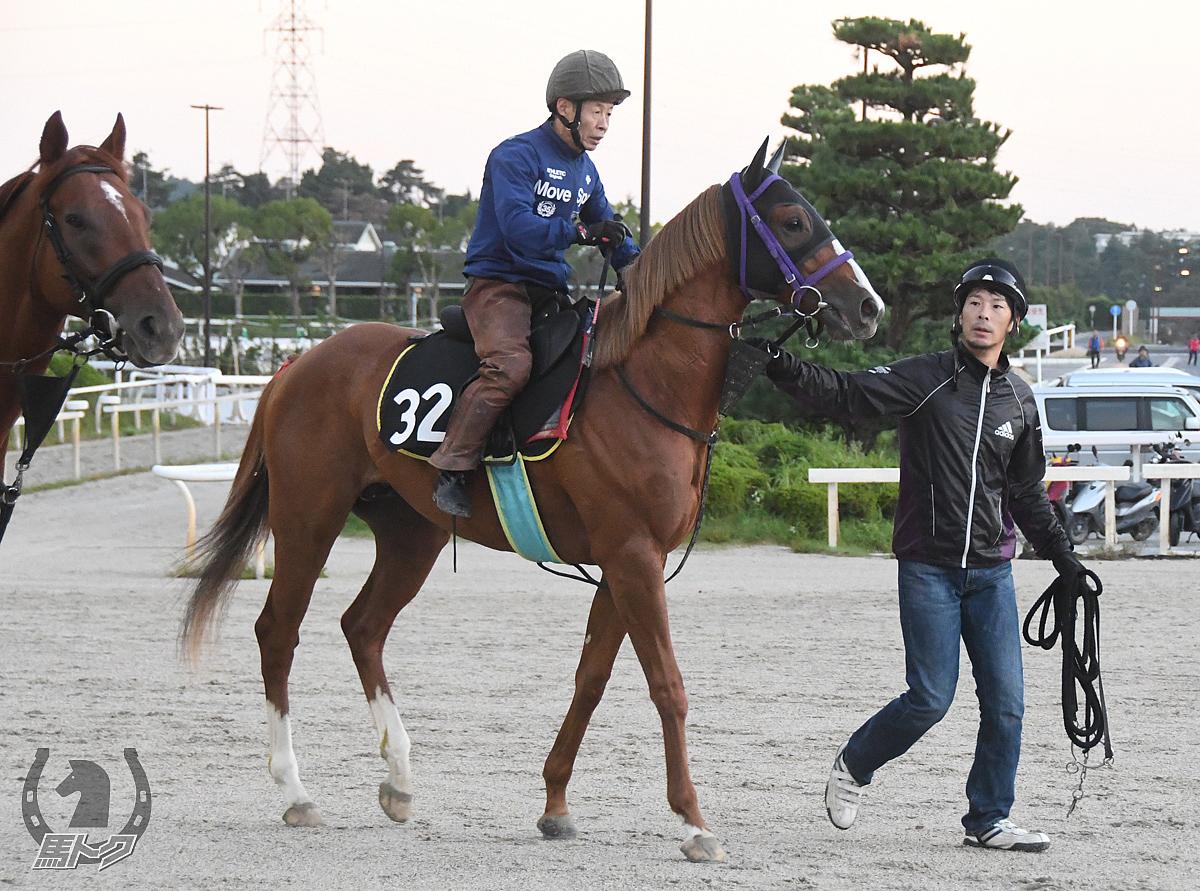 アスタードラゴンの馬体写真